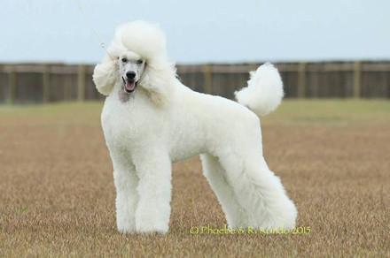 Tina_puppy